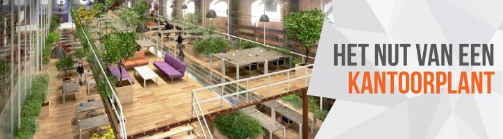 Een betere concentratie op de werkvloer? Zorg voor kantoorplanten!
